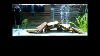 Download fish tank is cloudy (1:50 watch this get clear!) Awesome! Video