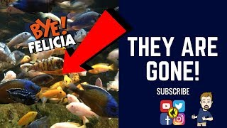 Download SOME OF THESE FISH ARE NO MORE Video