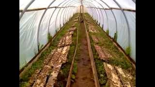 Download Helix Aspersa Maxima young - a greenhouse. In Lithuania Video