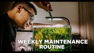 Download WEEKLY Aquarium MAINTENANCE ROUTINE - in my 4 beautiful planted NANO Aquariums Video