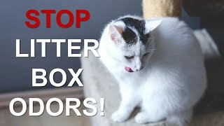 Download How To Keep Your Litter Box From Stinking Up Your House!! |Control Litter Box Odors Video