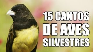 Download 15 CANTOS DE AVES SILVESTRES DO BRASIL ♫ Video