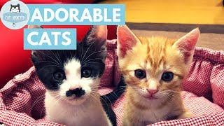 Download Cats Are Simply Adorable Video