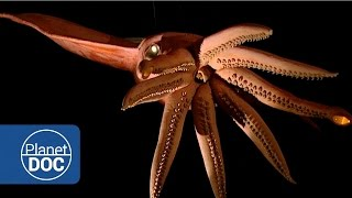 Download Kraken Project; In search of the Giant Squid | Full Documentaries - Planet Doc Full Documentaries Video
