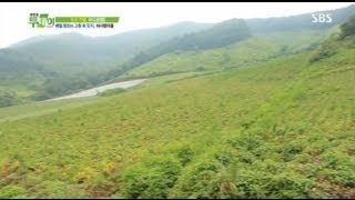 Download 해발 800m 고원 속 오지, 비사랑마을 @생방송 투데이 130805 Video