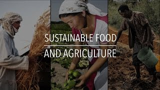 Download FAO Policy Series: Sustainable Food and Agriculture Video