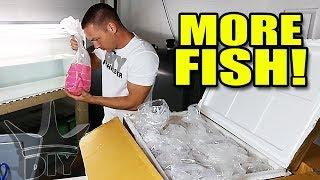 Download UNBOXING MY SECRET FISH Video