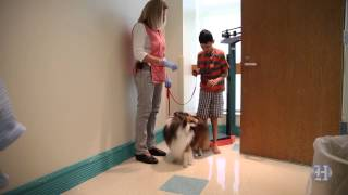 Download Honey Bear, a therapy dog, brings smiles to sick children at Nicklaus Children's Hospital Video
