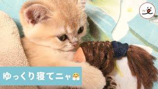 Download スヤスヤタイム😚 人形をギュッと抱き寄せるニャンコ【PECO TV】 Video