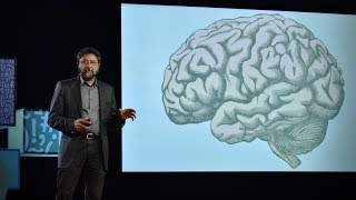 Download How your brain decides what is beautiful | Anjan Chatterjee Video