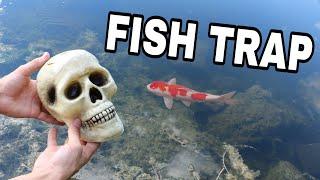 Download SKULL FISH TRAP CATCHES RARE COLORFUL FISH Video