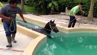 Download Caballo en piscina Video