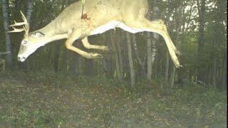 Download Craziest Trail Cam Pictures Ever Captured Video