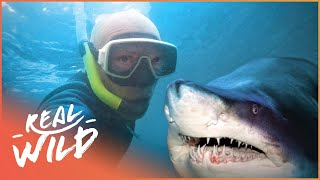 Download From Hunting Sharks, To Saving Them!| Tales Of A Shark Hunter | Wild Things Documentary Video