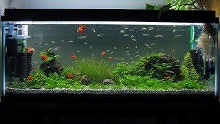 Download 900 aquarium : basalt, moss, Zebra danio, Red platy, Neon tetra Video