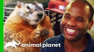 Download Mott Mott The Marmot Has A Special Bond With Her Best Buddy! | The Zoo Video