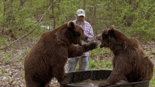 Download To Teach a Bear to Fish Video