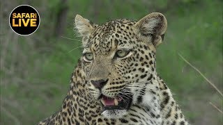 Download safariLIVE - Sunset Safari - January 10, 2019 Video
