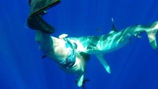 Download Oceanic Whitetip Shark Bites Diver Video