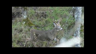 Download Bow Hunting Michigan Public Land 2017 | Every Hunters Nightmare Video