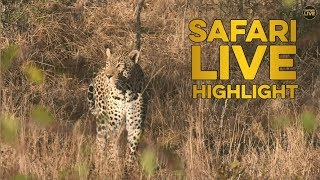 Download Leopard Family Reunion! Video