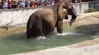 Download Bojnice ZOO - slon v bazene Video