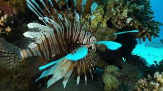 Download Hurghada Januar 2020 Part 1 Video
