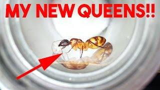 Download MY NEW QUEEN ANTS!! Video