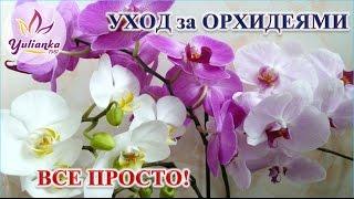 Download Орхидеи. Основные принципы правильного ухода Video