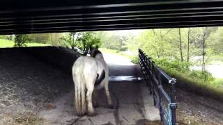 Download Mare in foal, tethered on public footpath Video