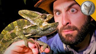 Download Night of the LIZARDS! Video