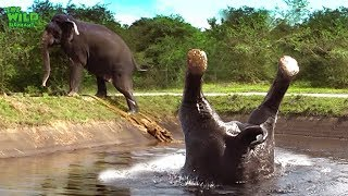 Download Somersaulting elephant saved from a canal Video