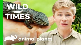 Download A Season of Wild Times with The Irwins Video