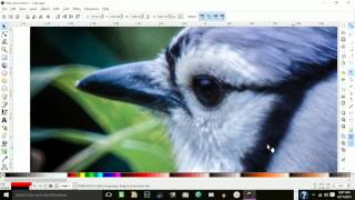 Download Inkscape: How to Trace a Photo in Layers Video