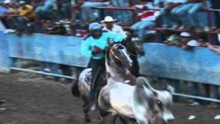 Download El caballo de las ciento y pico.. se despide del coleo.. Video