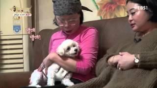 Download 세상에 나쁜 개는 없다 - 금쪽같은 내 새끼, 뽀송이 #001 Video