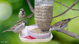 Download Water Bottle Bird Feeder Homemade | Easy Bird Feeder Craft | Plastic Bottle Recycling Video