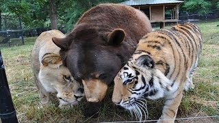 Download Animals ADOPTING Other Animal Species! Video