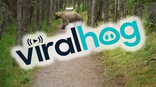 Download Hiking With Bears || ViralHog Video
