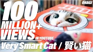Download 賢い猫 Video
