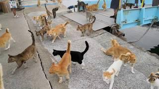 Download 【猫島】昼便で来た人に着いていく猫の数が凄過ぎる! Video