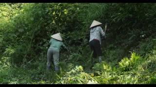 Download Améliorer les revenus et la couverture forestière au Vietnam Video