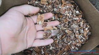 Download Semi-Automatic Pecan Shelling Video