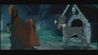 Download Lady and the Tramp Video