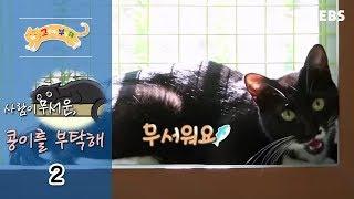 Download 고양이를 부탁해 - 사람이 무서운 콩이를 부탁해 #002 Video