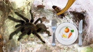 Download Preparing healthy FOOD for my TARANTULAS !!! (feat. Elvarg) Video