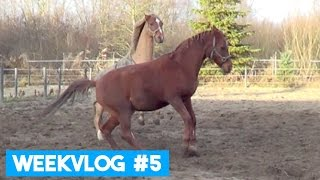 Download WEEKVLOG #5- Paarden gaan los in de paddock! | LeanneAbigail Video