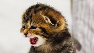 Download Mom Cat Meowing and Talking for Kittens | Generation ″O″ Cats Videos Video
