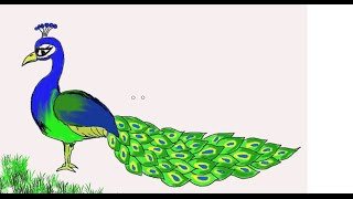 Download Easy Kids Drawing Lessons : How to Draw a Peacock Video