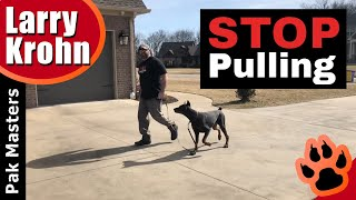 Download How to teach any dog to stop pulling and walk nicely on a loose leash Video